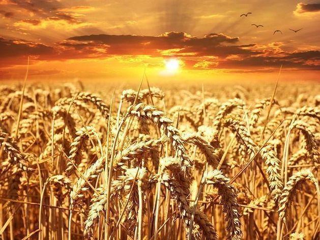 Аграрии Красноярского края: посевная под угрозой