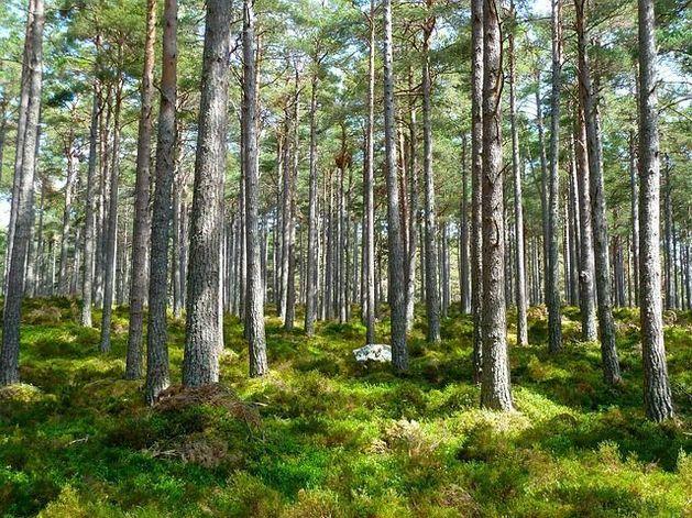 Чиновники высадят деревья на Николаевской сопке взамен срубленных из-за Универсиады