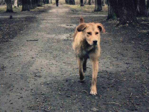 Подрядная организация сфальсифицировала отчетность по отлову собак в Красноярске