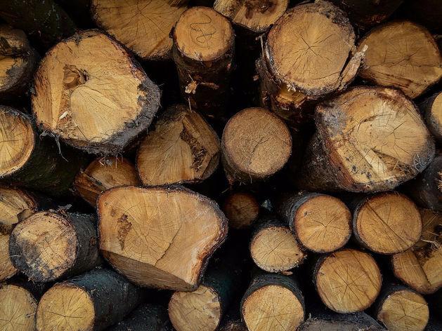 В лесную промышленность Красноярского края привлекли 42 млрд рублей