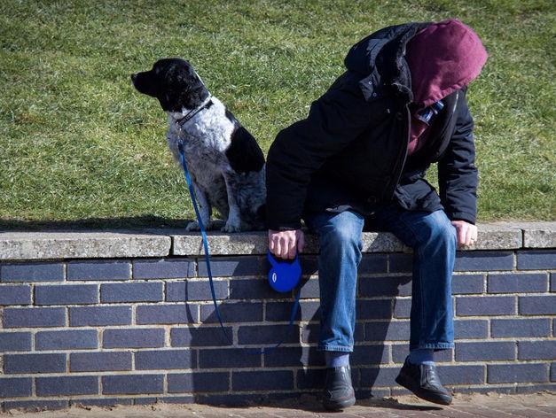 Красноярцев планируют штрафовать за неправильный выгул собак