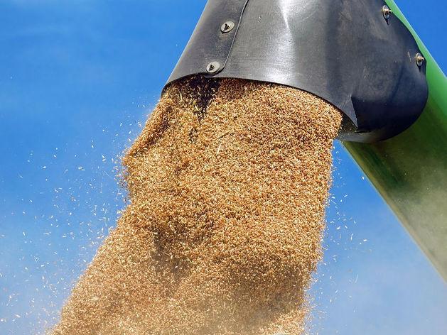 Куда везут урожай Красноярского края? В прошлом году зерно вывезли в 36 регионов страны