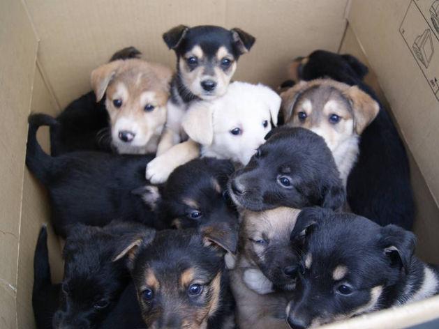 Ловить собак в Красноярске будут по новым правилам