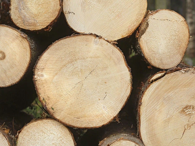 На Санкт-Петербургскую биржу выставили красноярскую древесину