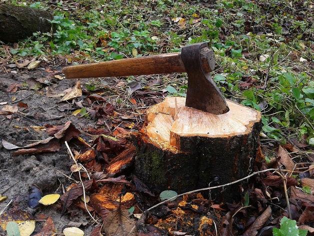 Из Сибири вывезли леса на 2 млрд долларов