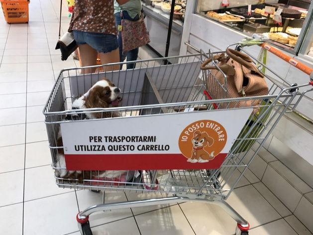 Стоит ли брать домашних питомцев в супермаркет?
