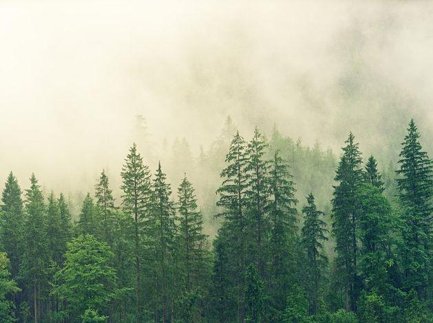 В министерстве лесного хозяйства Красноярского края прошли обыски