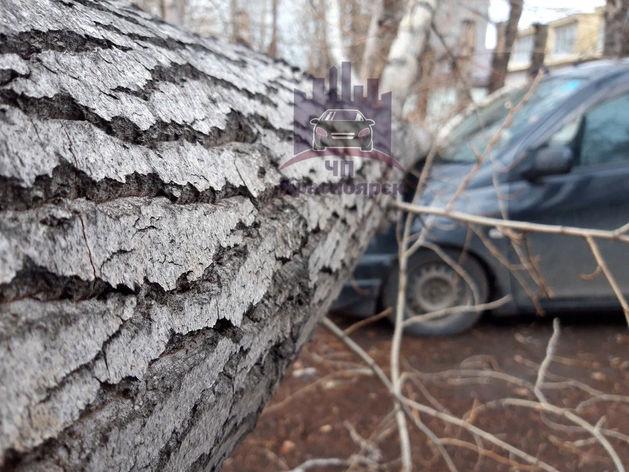 Сильный ветер не уйдет из Красноярска и в среду