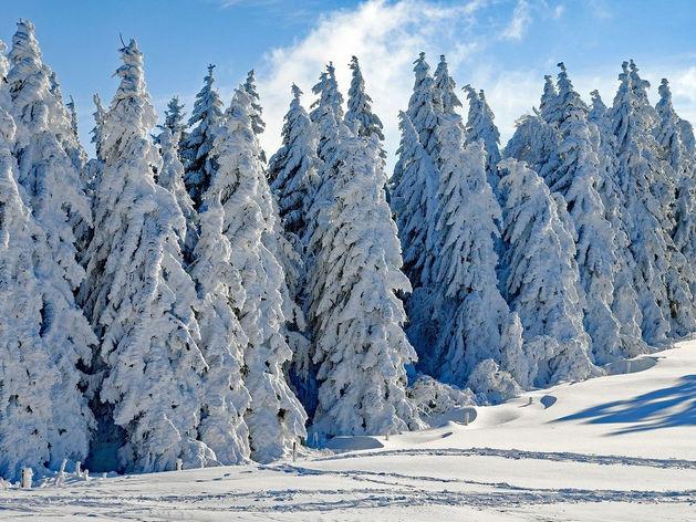 Красноярские депутаты предложили обсуждать вырубку деревьев