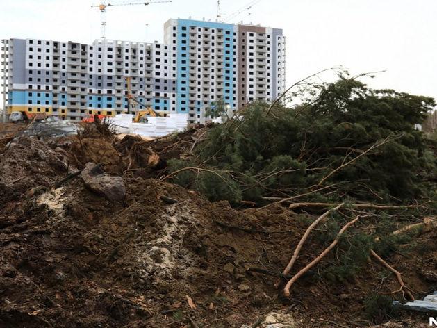 Посчитать стволы: мэрия Красноярска проведет перепись деревьев за 5 млн рублей