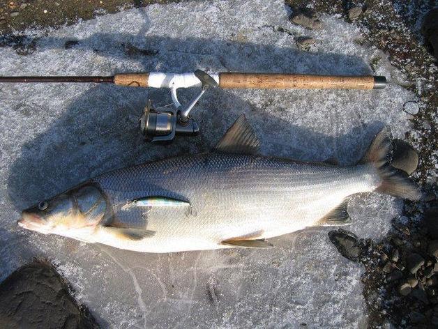 Изъятый у браконьеров улов продают через красноярские магазины