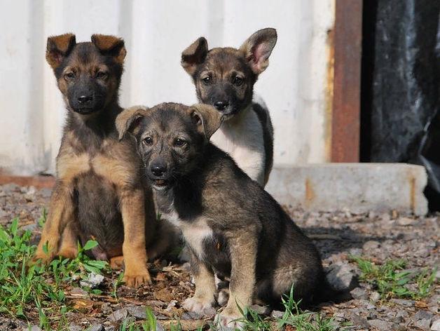 В некоторых районах Красноярска ввели режим ЧС из-за агрессивных бездомных животных