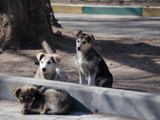 Мэрия ищет строителей приюта для бездомных животных в Красноярске