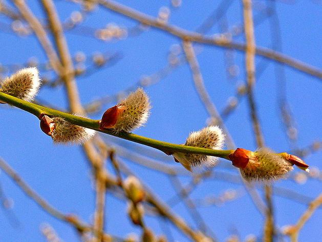 На первой неделе апреля Красноярск ожидает почти летняя погода