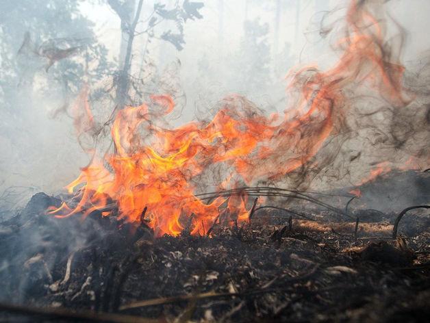 Горим: 22 лесных пожара потушили за выходные в Красноярском крае