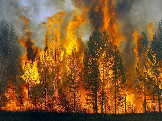 101 лесной пожар зарегистрирован в Красноярском крае