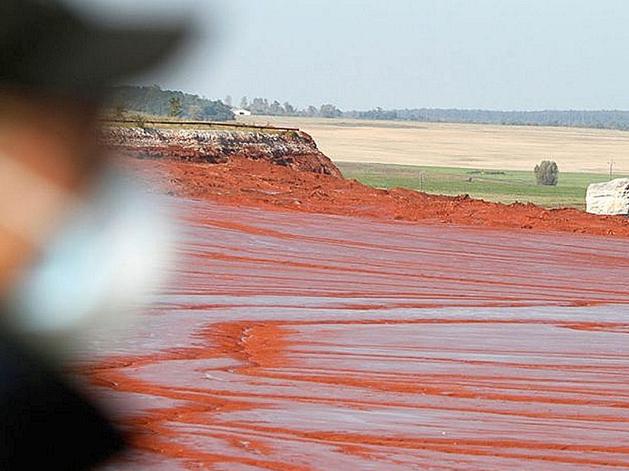 Ученые СФУ создали концентрирующий ценные металлы биосорбент