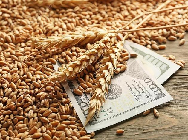 Аграрии Красноярского края существенно нарастили экспорт зерна