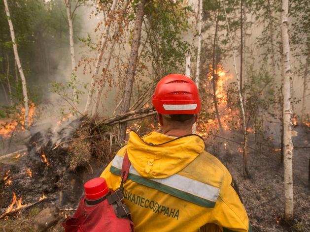 Тушением лесных пожаров в Красноярском крае займется новая госструктура