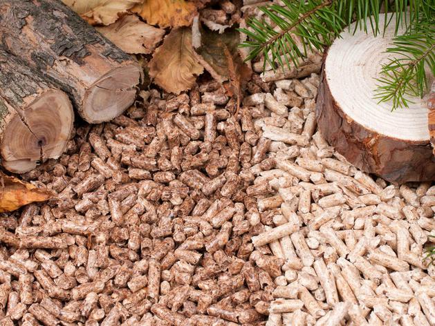 В Красноярском крае построят завод по переработке неликвидной древесины