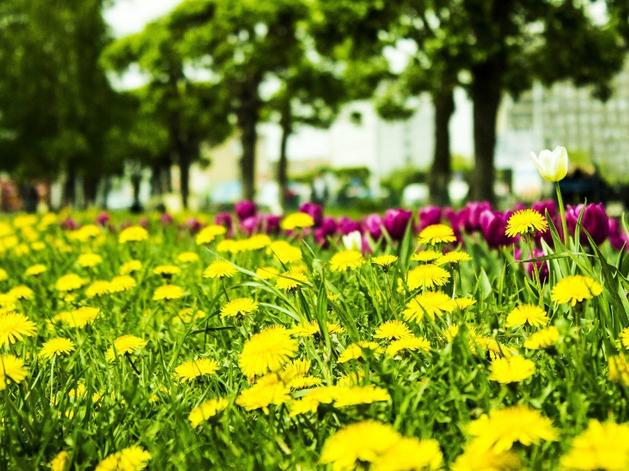 Погода порадует: первая неделя лета в Красноярске будет жаркой