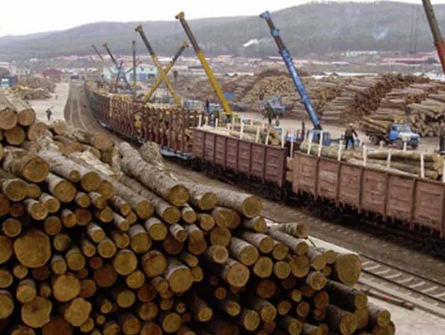 Меньше в весе, но больше в цене: куда уходит сибирский лес?